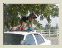 Cairo Utah Police Dog
